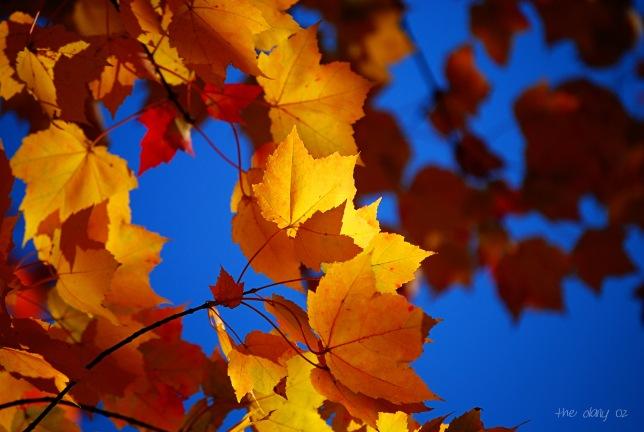 leavesb